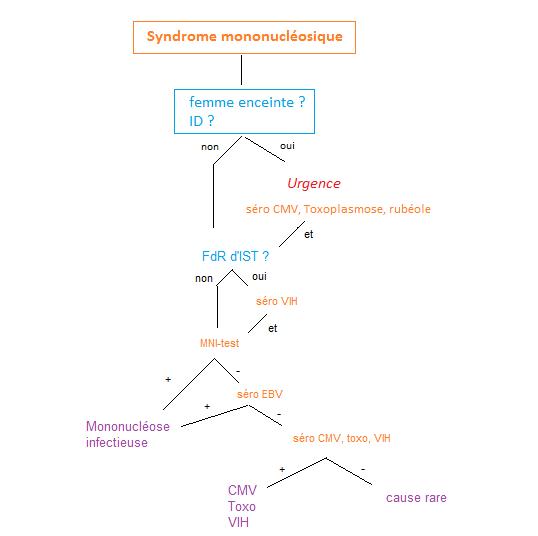 334 Syndrome mononucléosique
