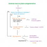 297 Anémie macrocytaire arégénérative