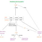 297 Anémie microcytaire