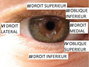 Oculomotricite